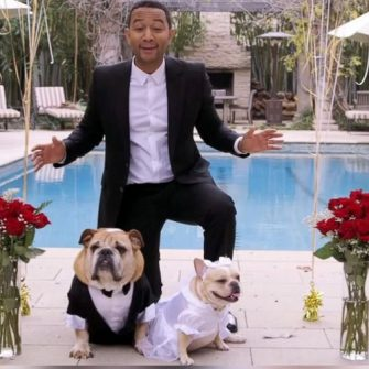 john legend and dogs