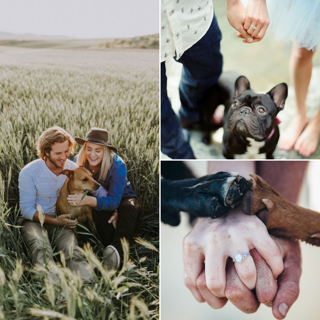 Pets-Included-In-Your-Wedding-Day