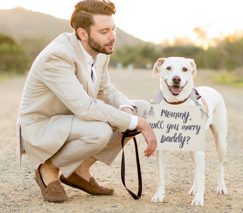 Cute proposal dog
