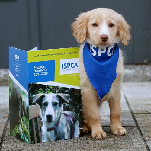 ISPCA-Irish-Charity-In-Need